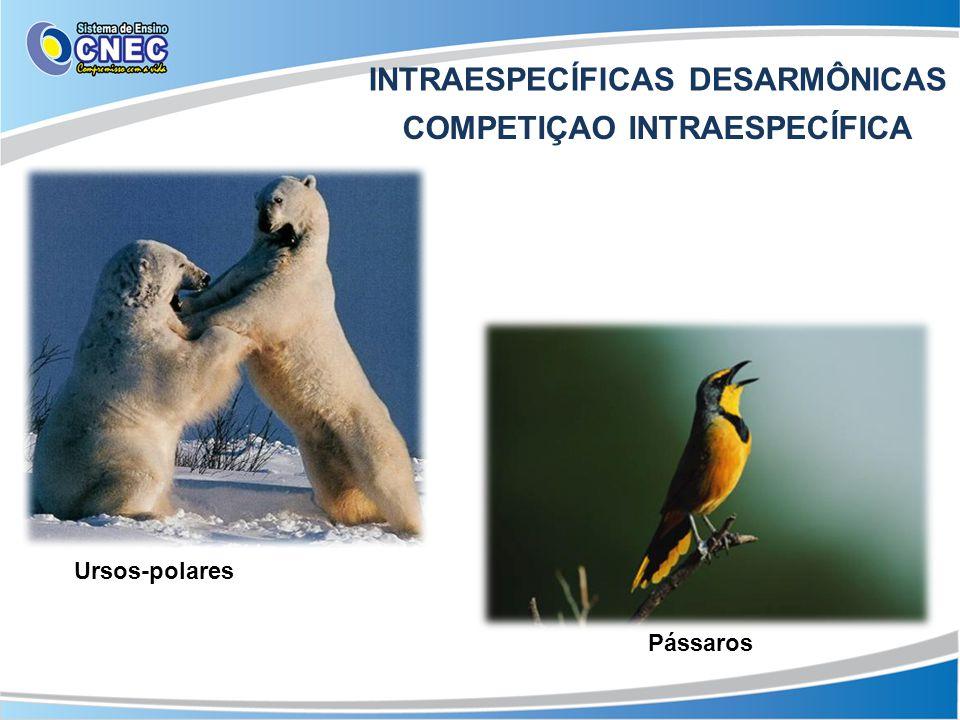 INTRAESPECÍFICAS DESARMÔNICAS COMPETIÇAO INTRAESPECÍFICA Pássaros Ursos-polares