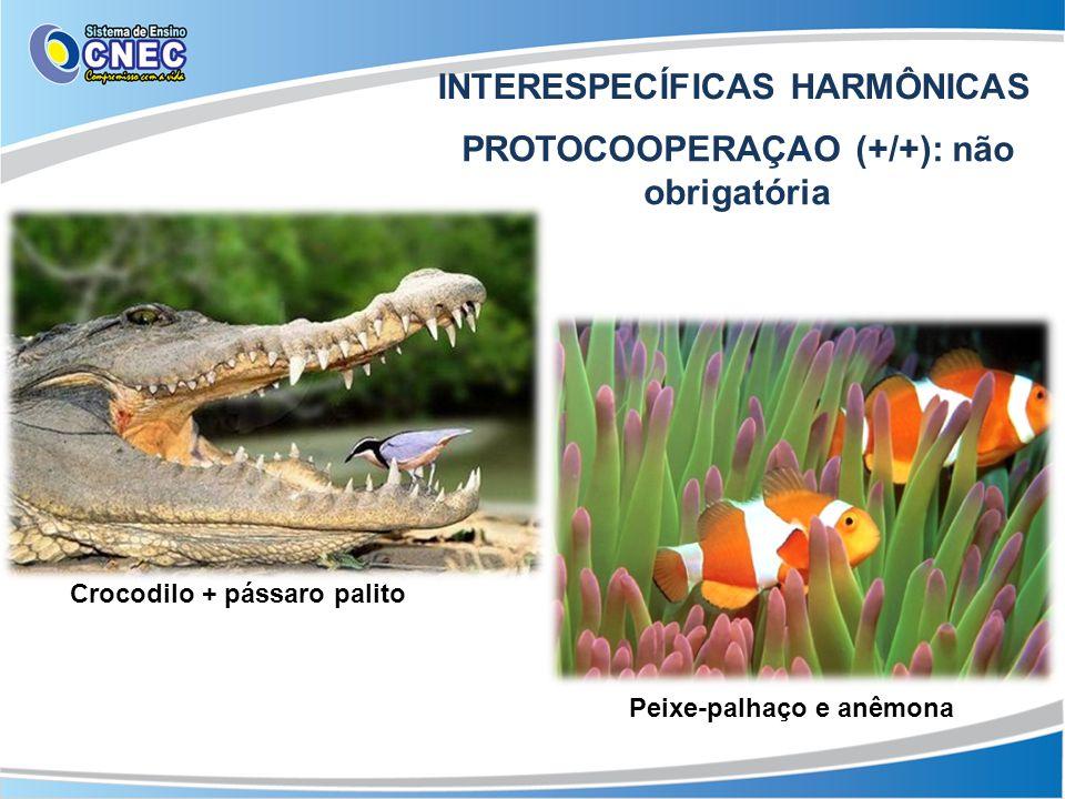 INTERESPECÍFICAS HARMÔNICAS PROTOCOOPERAÇAO (+/+): não obrigatória Crocodilo + pássaro palito Peixe-palhaço e anêmona