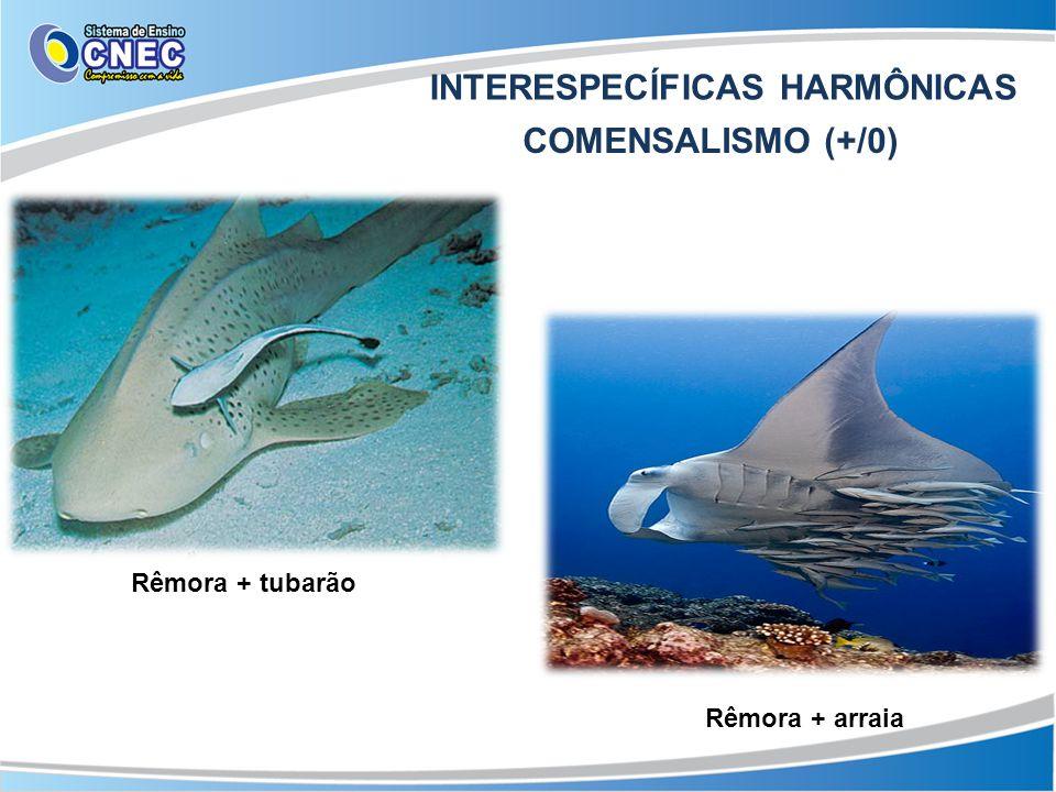 INTERESPECÍFICAS HARMÔNICAS INQUILINISMO (+/0) Caranguejo-ermitão + concha de moluscos