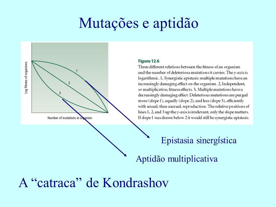 Mutações e aptidão Epistasia sinerg í stica Aptidão multiplicativa A catraca de Kondrashov