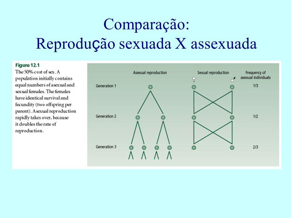 Comparação: Reprodu ç ão sexuada X assexuada