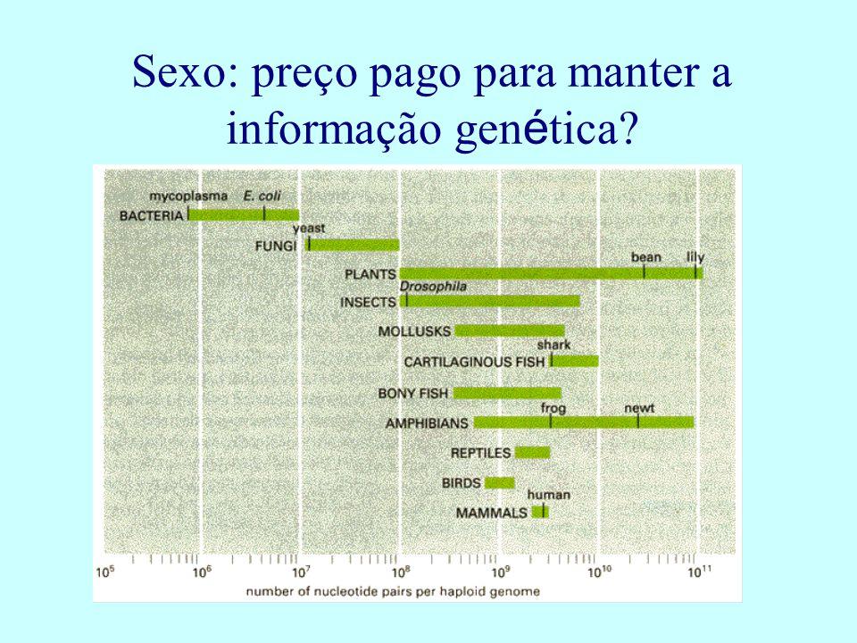 Sexo: preço pago para manter a informação gen é tica?