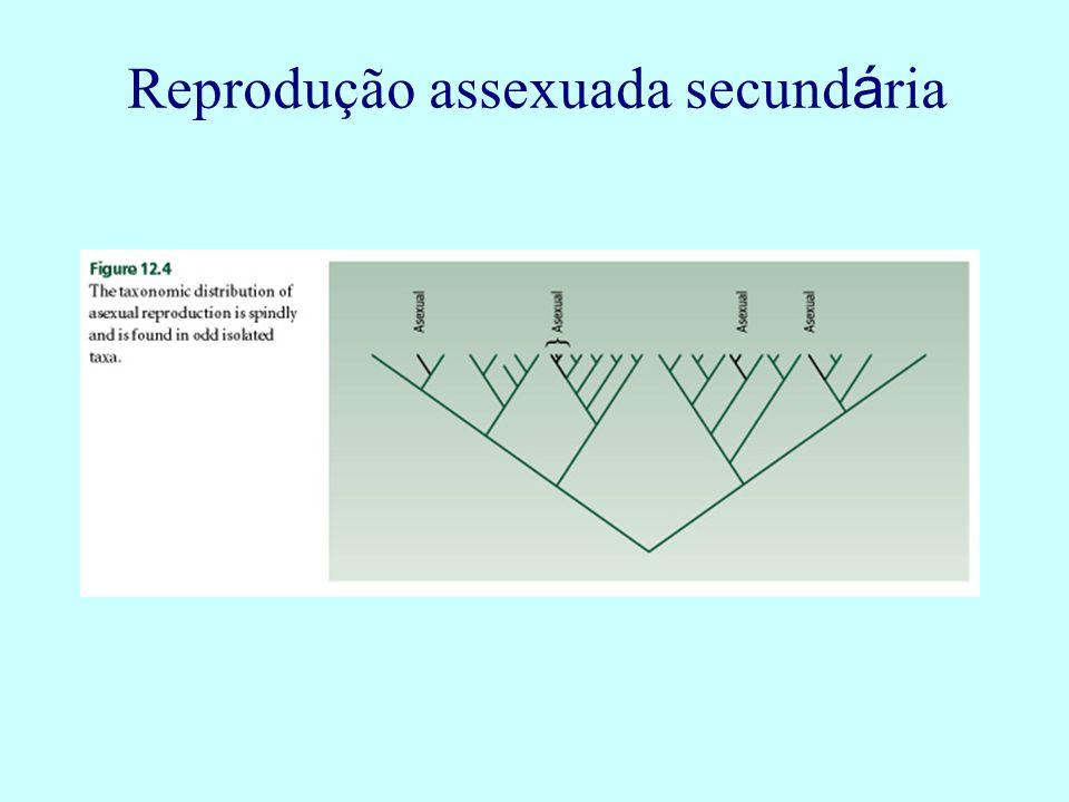 Reprodução assexuada secund á ria