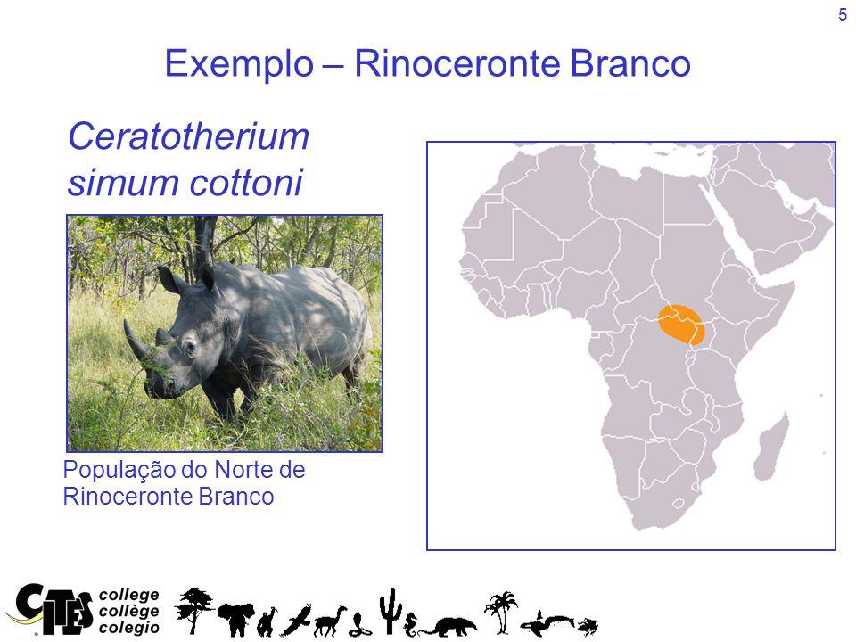 5 Exemplo – Rinoceronte Branco Species Ceratotherium simum cottoni População do Norte de Rinoceronte Branco