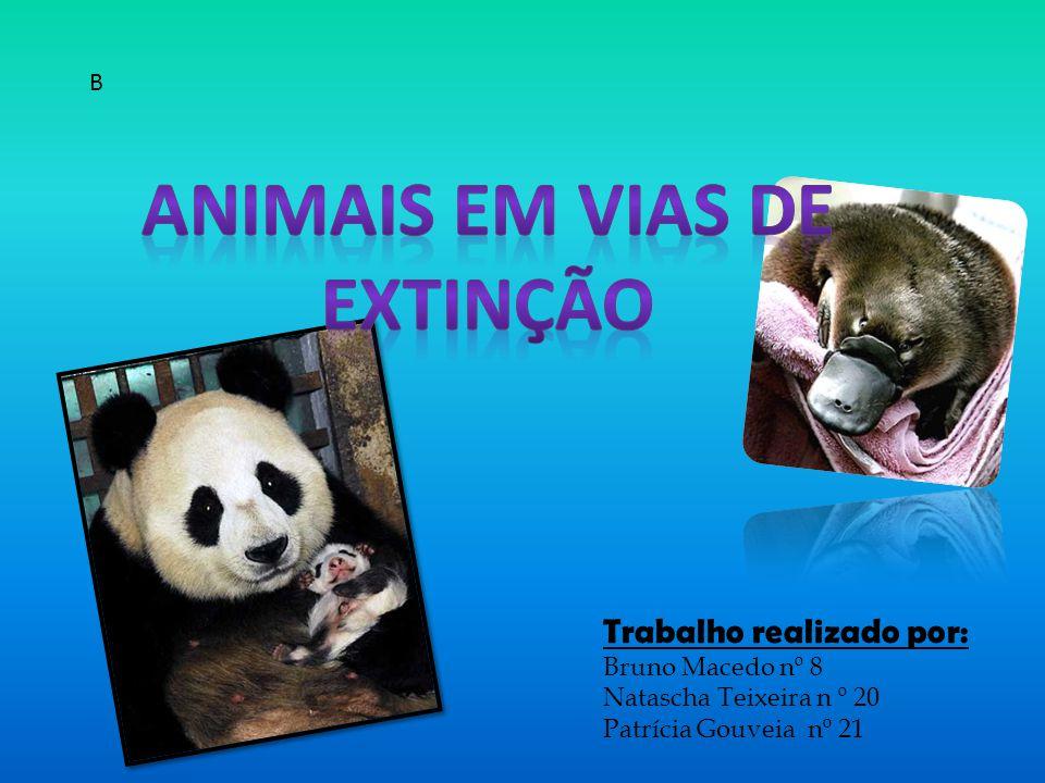 Trabalho realizado por: Bruno Macedo nº 8 Natascha Teixeira n º 20 Patrícia Gouveia nº 21 B