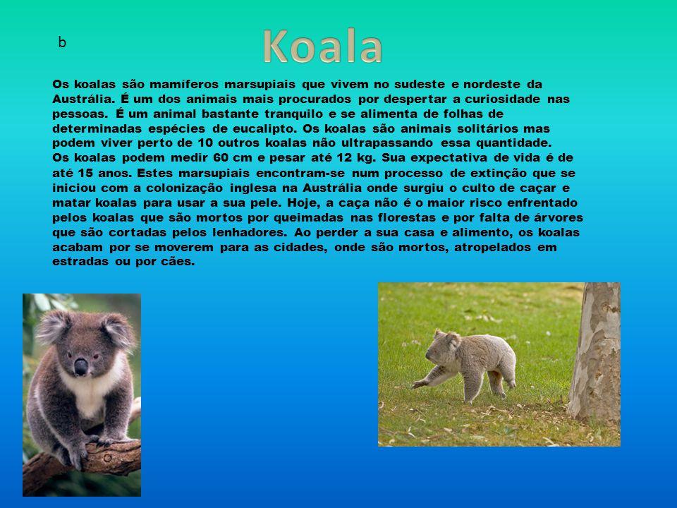 Os koalas são mamíferos marsupiais que vivem no sudeste e nordeste da Austrália.