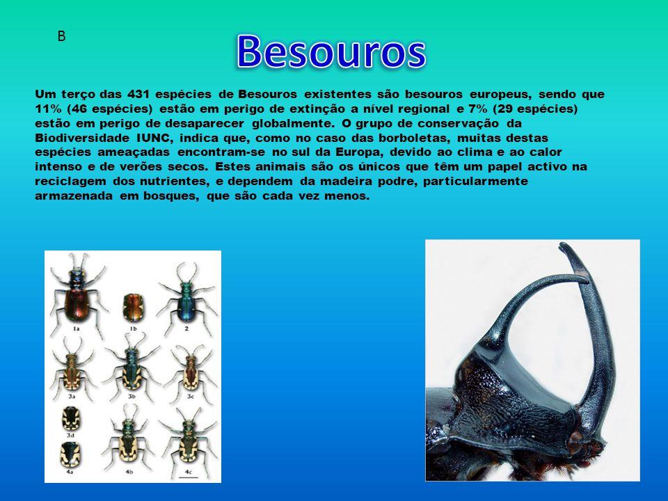 Um terço das 431 espécies de Besouros existentes são besouros europeus, sendo que 11% (46 espécies) estão em perigo de extinção a nível regional e 7% (29 espécies) estão em perigo de desaparecer globalmente.