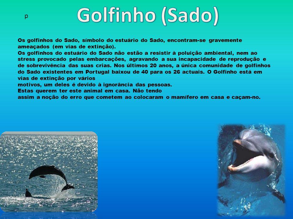 Os golfinhos do Sado, símbolo do estuário do Sado, encontram-se gravemente ameaçados (em vias de extinção).