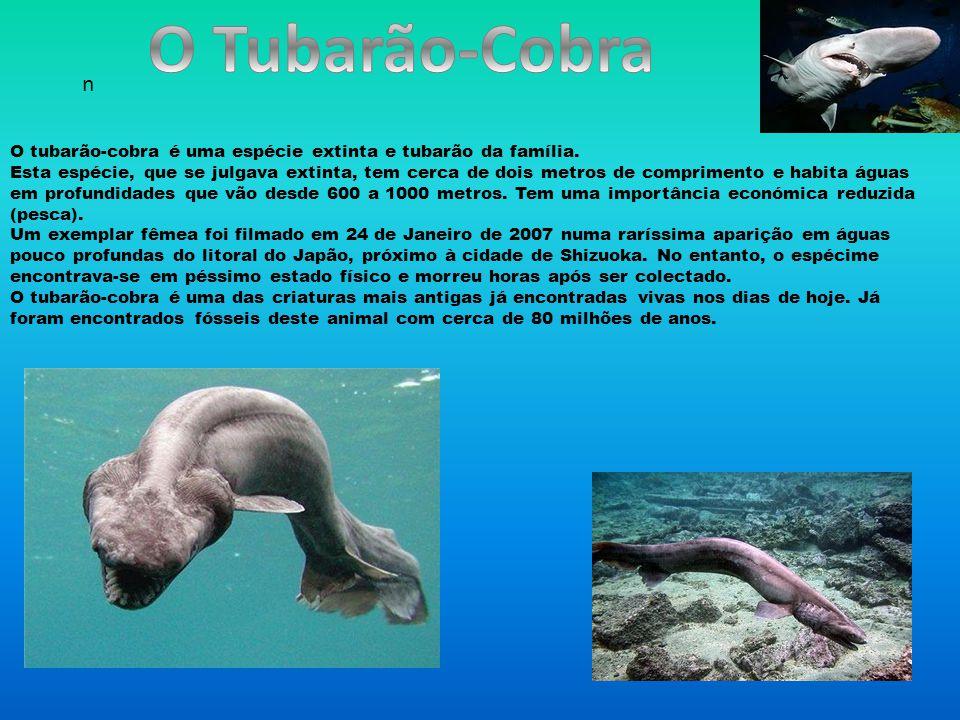O tubarão-cobra é uma espécie extinta e tubarão da família.