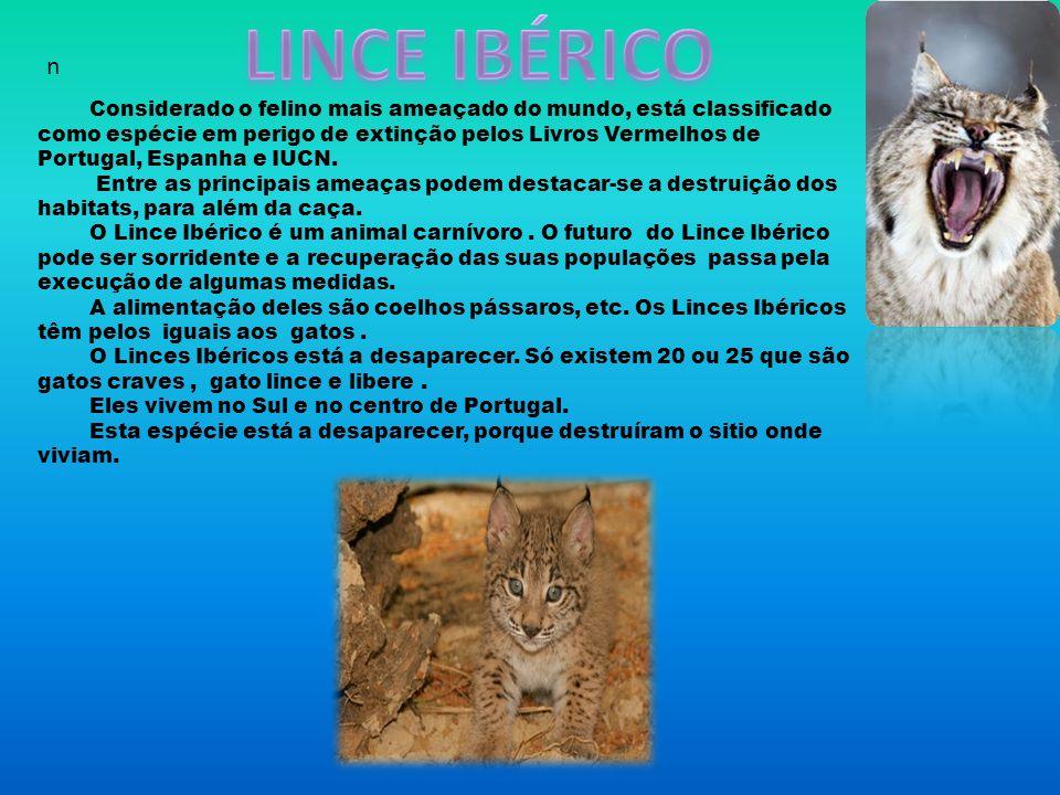 Considerado o felino mais ameaçado do mundo, está classificado como espécie em perigo de extinção pelos Livros Vermelhos de Portugal, Espanha e IUCN.