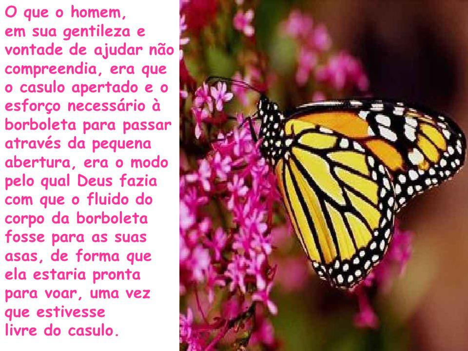 O que o homem, em sua gentileza e vontade de ajudar não compreendia, era que o casulo apertado e o esforço necessário à borboleta para passar através