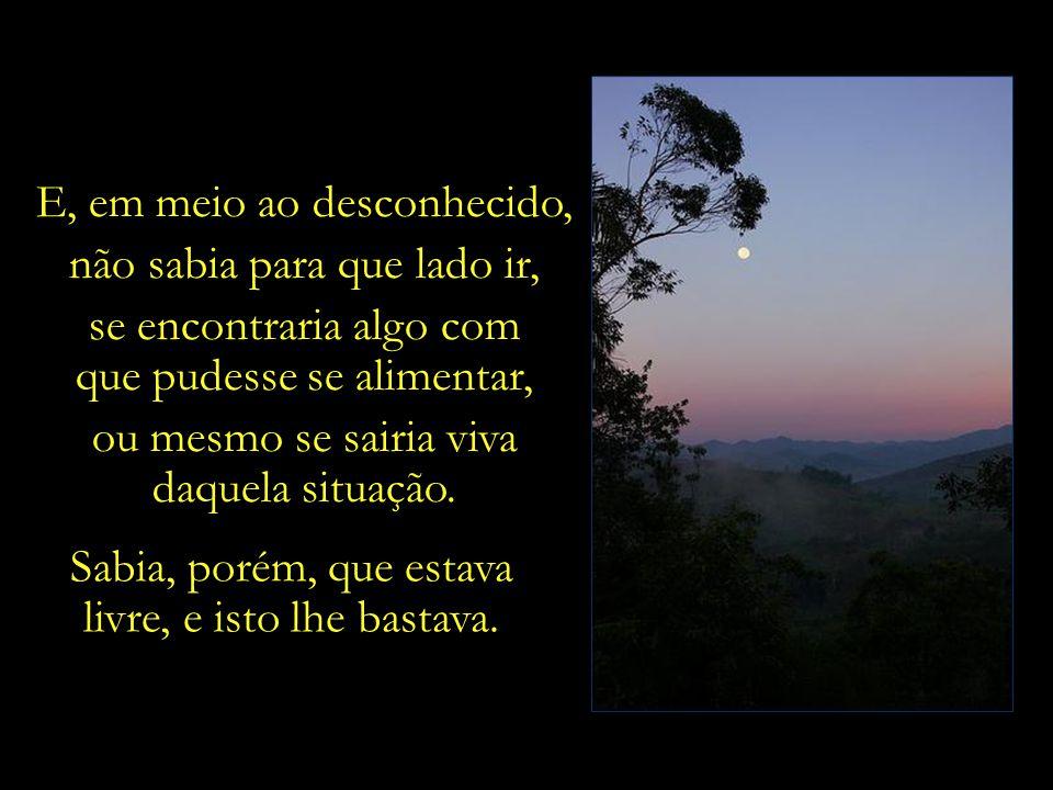 Acrescenta que tarde da noite buscava uma clareira em meio à densa vegetação, e ao se deitar contemplava, em liberdade, a lua e as estrelas antes de d