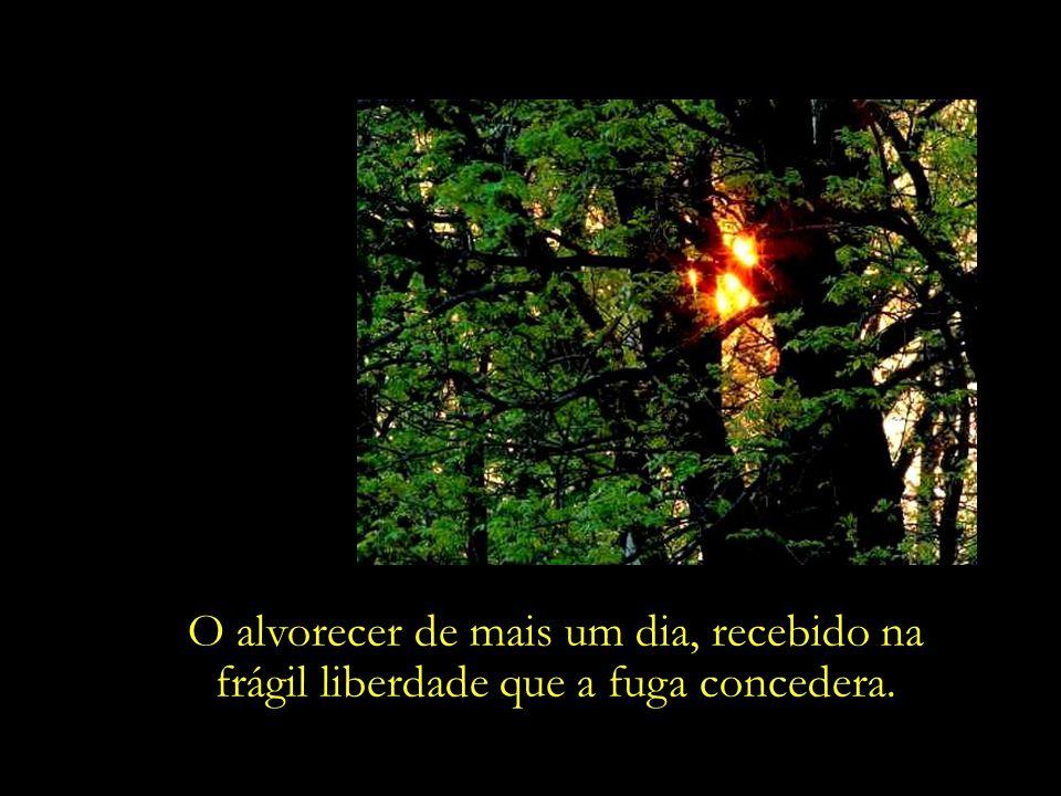 Liberdade, essa palavra que o sonho humano alimenta, Cecília Meireles que não há ninguém que explique e ninguém que não entenda...