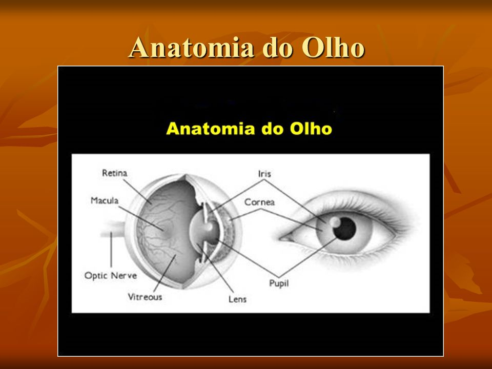 Anatomia do Olho