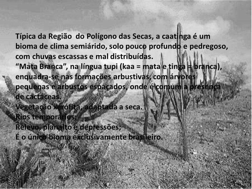 Típica da Região do Polígono das Secas, a caatinga é um bioma de clima semiárido, solo pouco profundo e pedregoso, com chuvas escassas e mal distribuí
