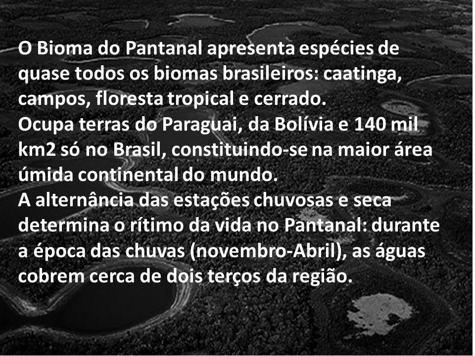 O Bioma do Pantanal apresenta espécies de quase todos os biomas brasileiros: caatinga, campos, floresta tropical e cerrado. Ocupa terras do Paraguai,