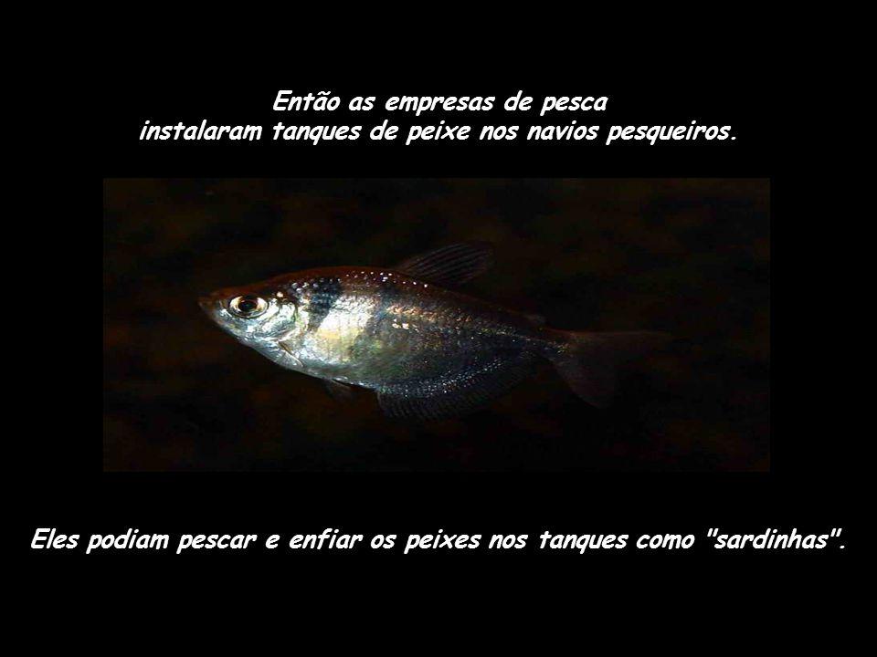 Os japoneses conseguiram notar a diferença entre peixe fresco e peixe congelado e, é claro, eles não gostaram do peixe congelado. Entretanto o peixe c