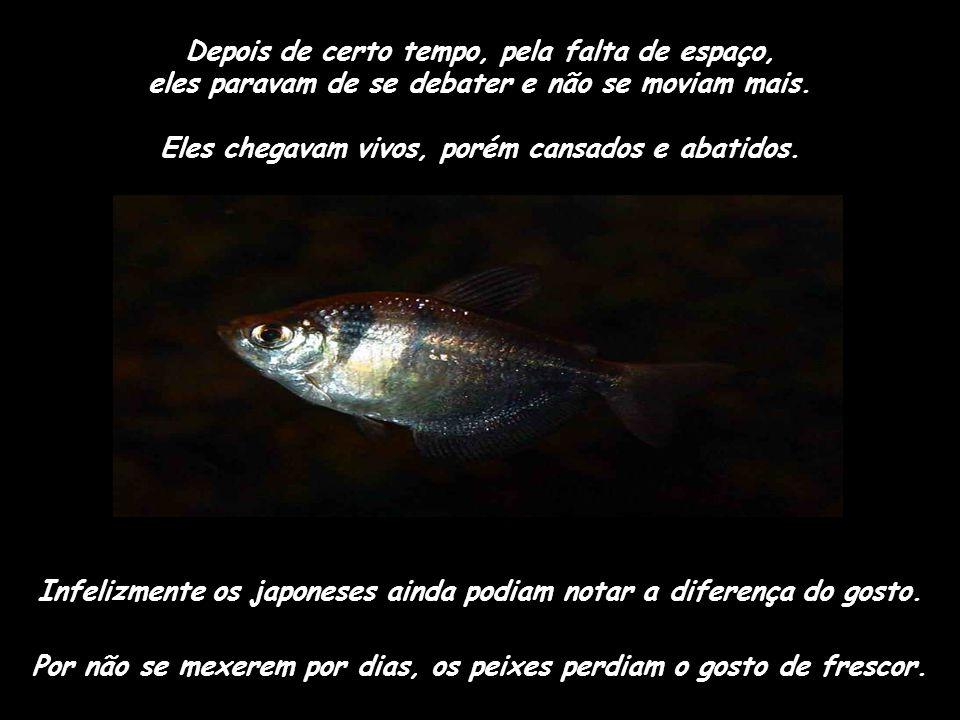 Então as empresas de pesca instalaram tanques de peixe nos navios pesqueiros. Eles podiam pescar e enfiar os peixes nos tanques como