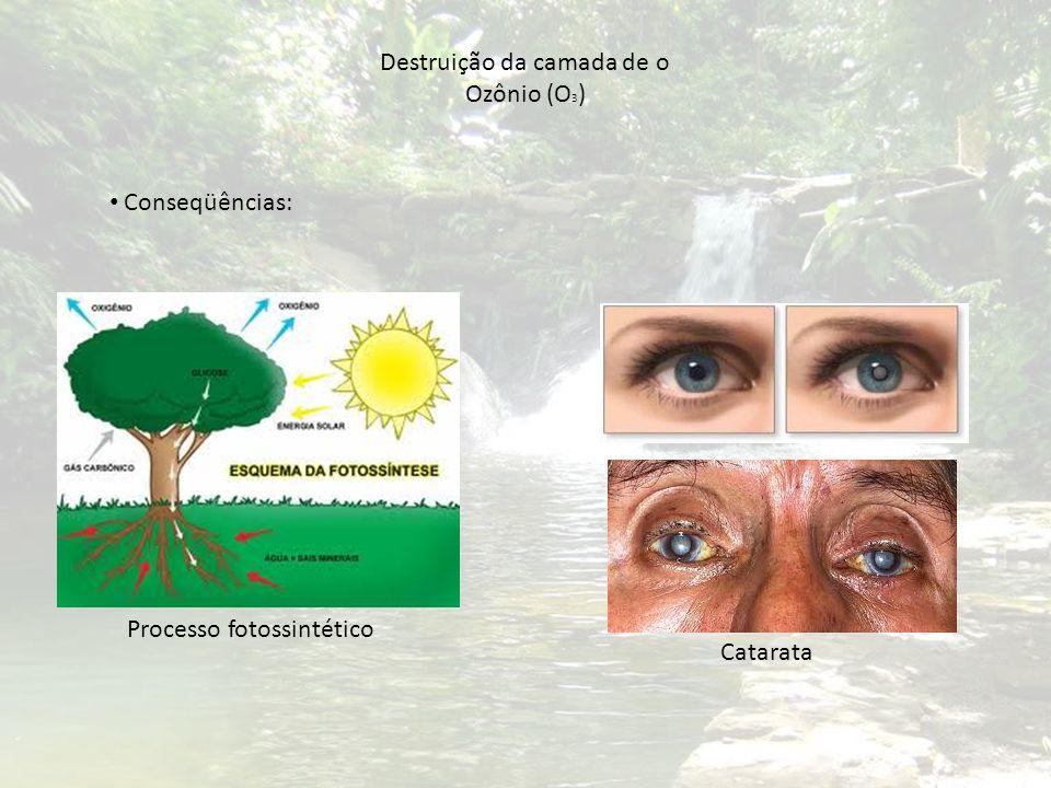 Destruição da camada de o Ozônio (O 3 ) Conseqüências: Processo fotossintético Catarata