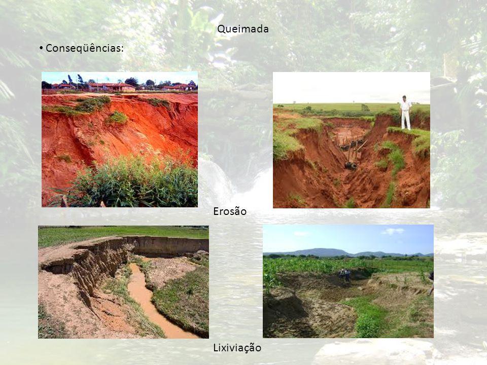 Conseqüências: Queimada Erosão Lixiviação