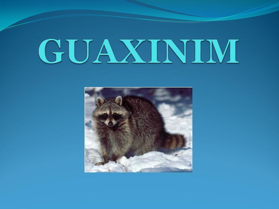 GUAXINIM Vivem normalmente nas Américas do Norte, Central e Sul