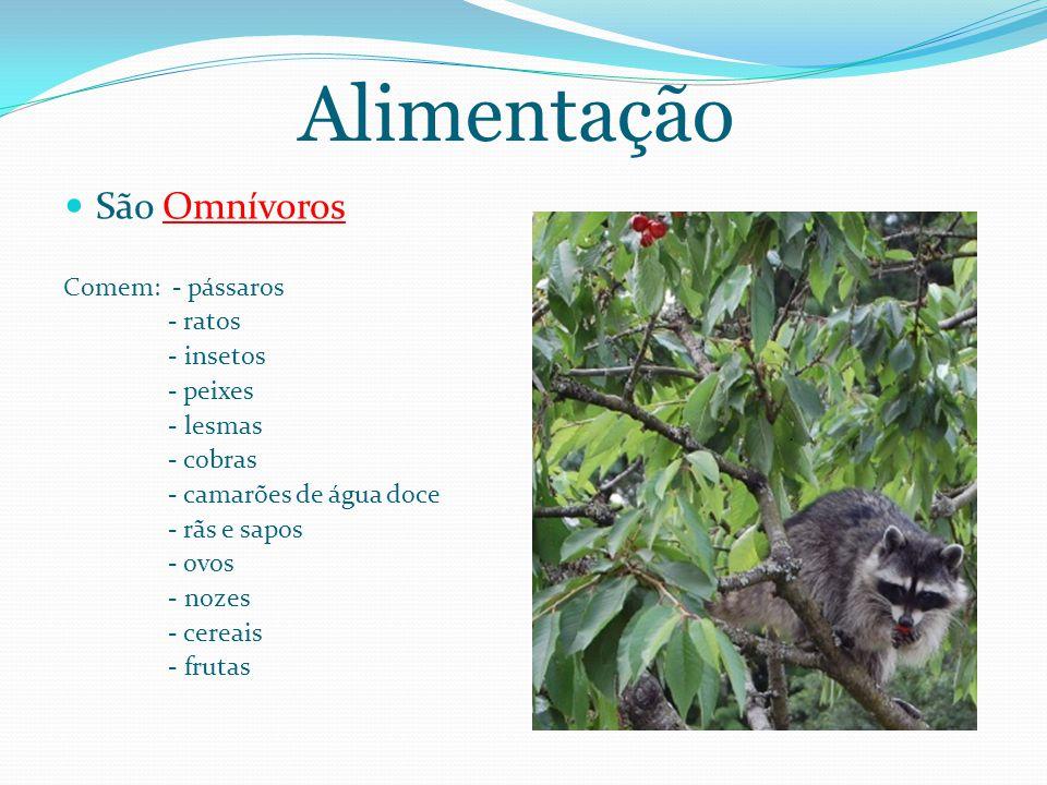 Alimentação São Omnívoros Comem: - pássaros - ratos - insetos - peixes - lesmas - cobras - camarões de água doce - rãs e sapos - ovos - nozes - cereais - frutas