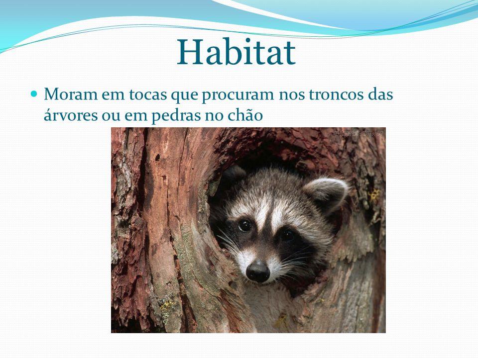 Habitat Moram em tocas que procuram nos troncos das árvores ou em pedras no chão