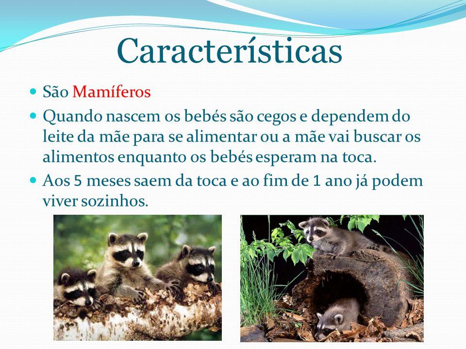 Características São Mamíferos Quando nascem os bebés são cegos e dependem do leite da mãe para se alimentar ou a mãe vai buscar os alimentos enquanto os bebés esperam na toca.