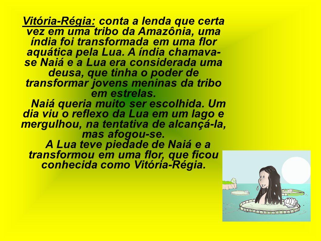 Vitória-Régia: conta a lenda que certa vez em uma tribo da Amazônia, uma índia foi transformada em uma flor aquática pela Lua. A índia chamava- se Nai