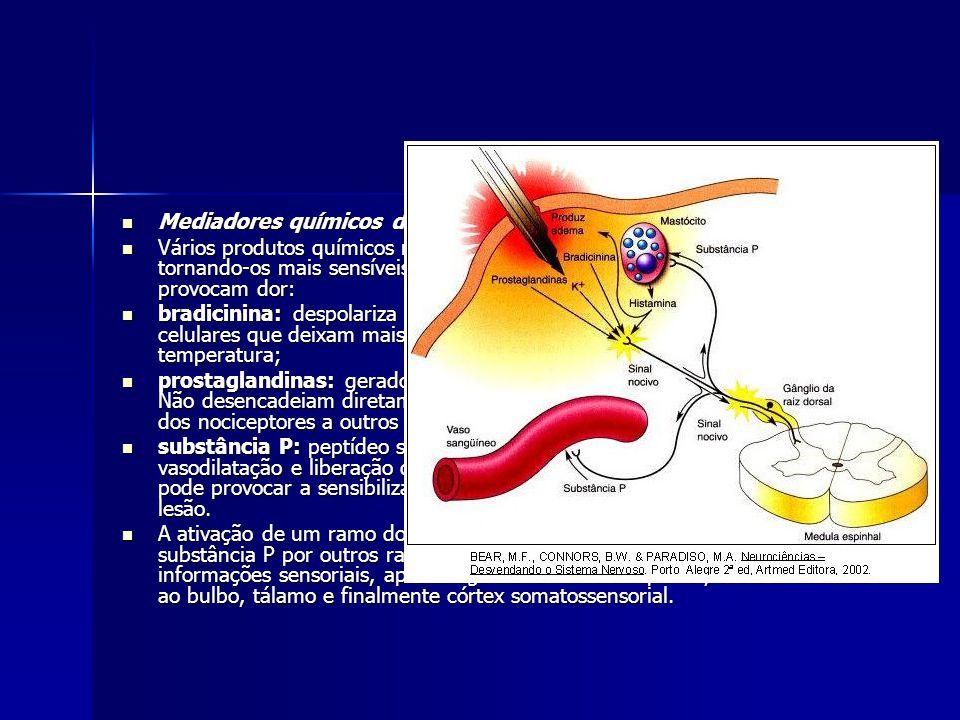 Mediadores químicos da dor Mediadores químicos da dor Vários produtos químicos modulam a excitabilidade dos nociceptores, tornando-os mais sensíveis a