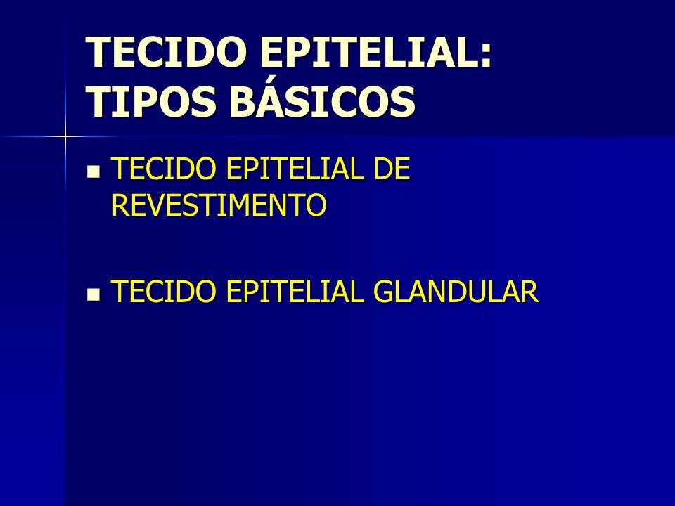 TECIDO EPITELIAL: TIPOS BÁSICOS TECIDO EPITELIAL DE REVESTIMENTO TECIDO EPITELIAL DE REVESTIMENTO TECIDO EPITELIAL GLANDULAR TECIDO EPITELIAL GLANDULA