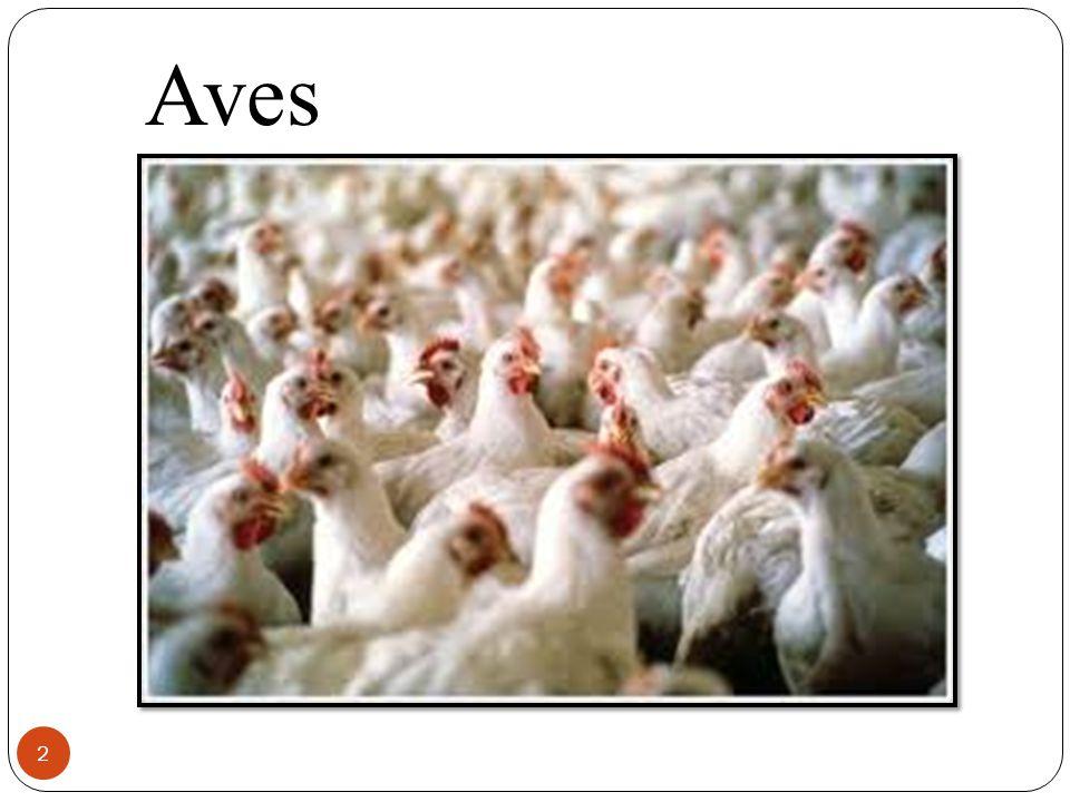 2 Aves