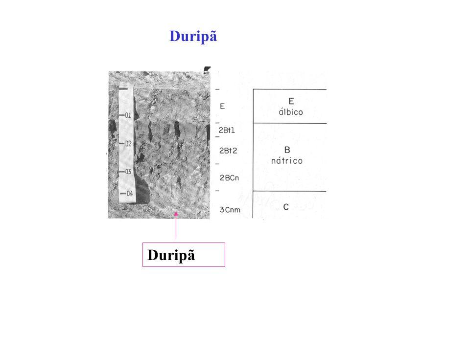 ESPODOSSOLOS........Hiperespessos Horizonte B espódico após 200cm da superfície. Perfil GB-50 Bh 400cm! Conveniente estabelecer parâmetros que reduzam