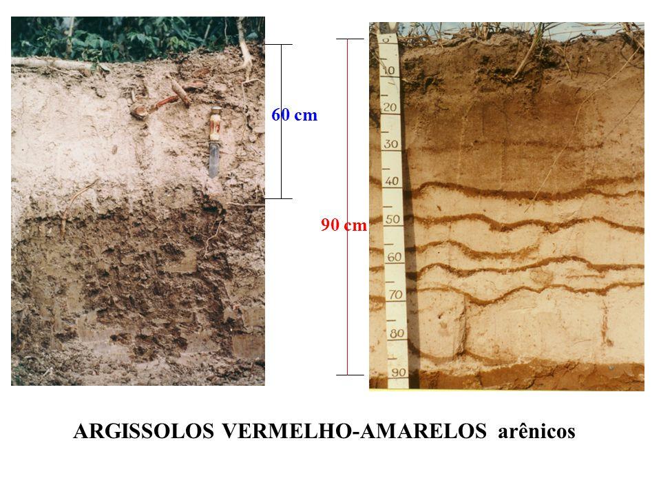 Bt E E Mudança textural abrúpta ocorre à profundidades variadas. A 35cm 60 cm Típico Arênico A