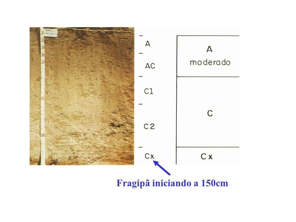 Fragipã (100-120cm) ESPODOSSOLOS CÁRBICOS Órticos fragipânicos NEOSSOLOS REGOLÍTICOS Psamíticos fragipânicos NEOSSOLOS QUARTZARÊNICOS Órticos fragipân