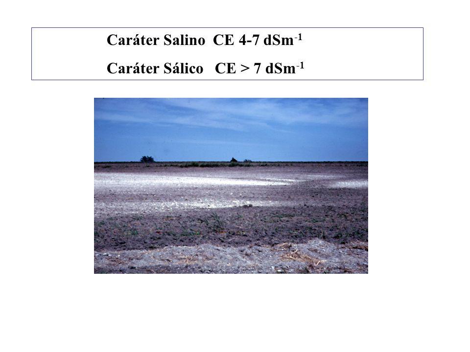 A importância do fragipã na reserva hídrica dos solos do semi-árido. Predominantemente solos de textura areia ou média. Jacomine (1970) assinala o suc