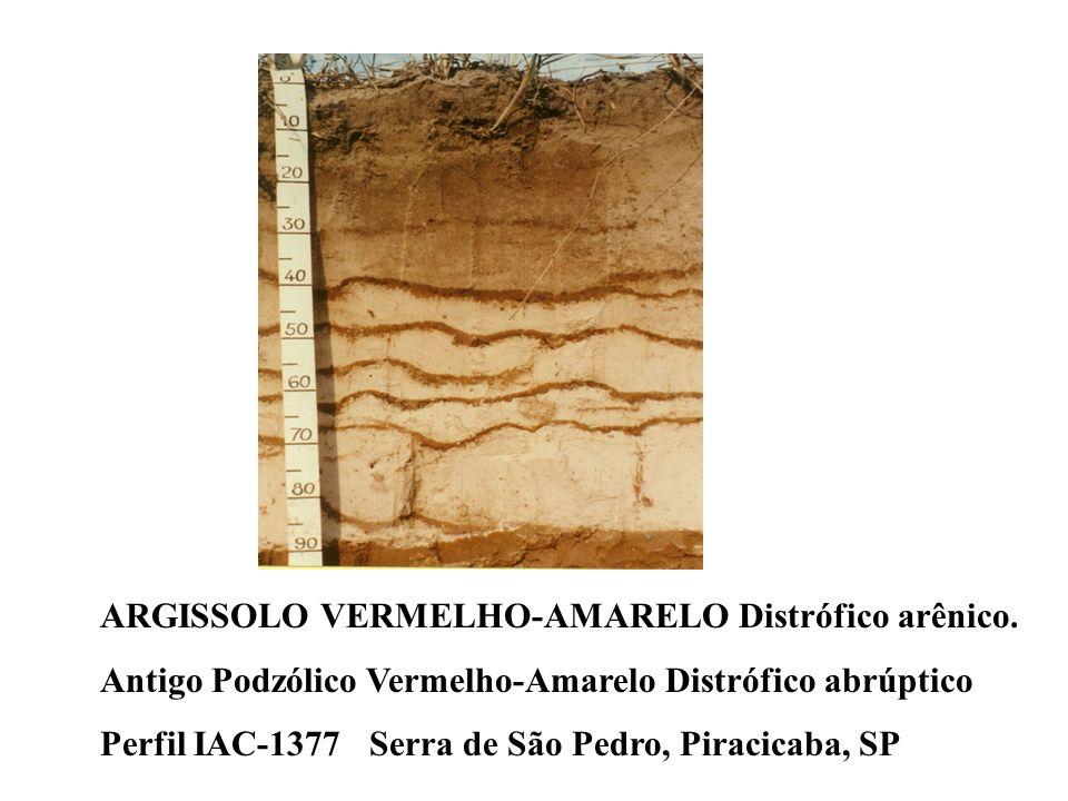 A problemática de identificação do horizonte B textural formado por lamelas