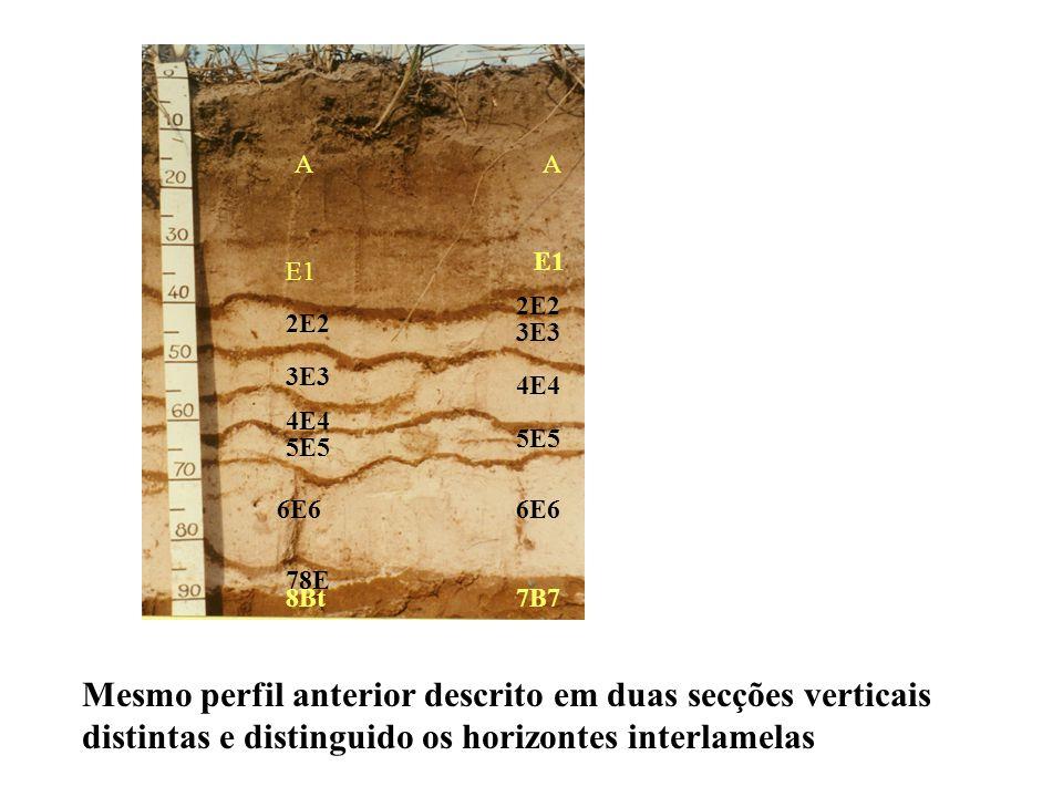 A E1 Bt Argila % 3 2 19 E2 2 Perfil coletado e descrito neste canto