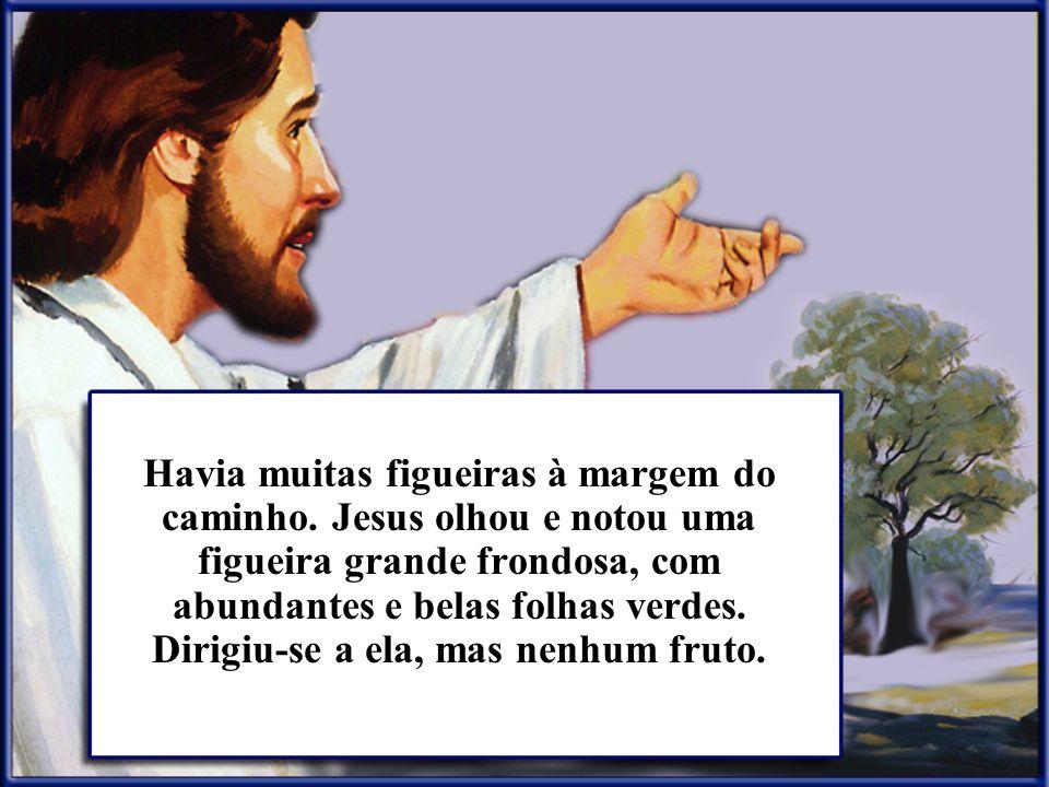 Havia muitas figueiras à margem do caminho. Jesus olhou e notou uma figueira grande frondosa, com abundantes e belas folhas verdes. Dirigiu-se a ela,