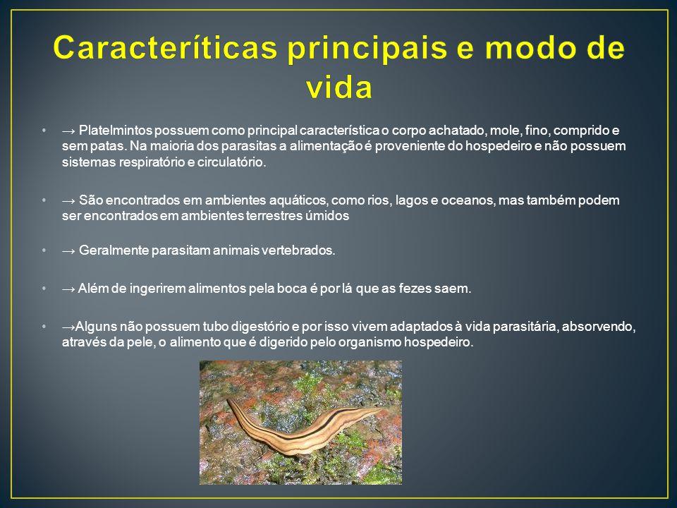 Platelmintos possuem como principal característica o corpo achatado, mole, fino, comprido e sem patas.