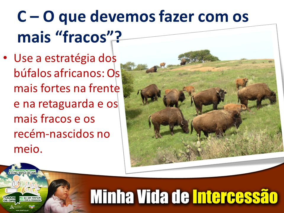 C – O que devemos fazer com os mais fracos? Use a estratégia dos búfalos africanos: Os mais fortes na frente e na retaguarda e os mais fracos e os rec