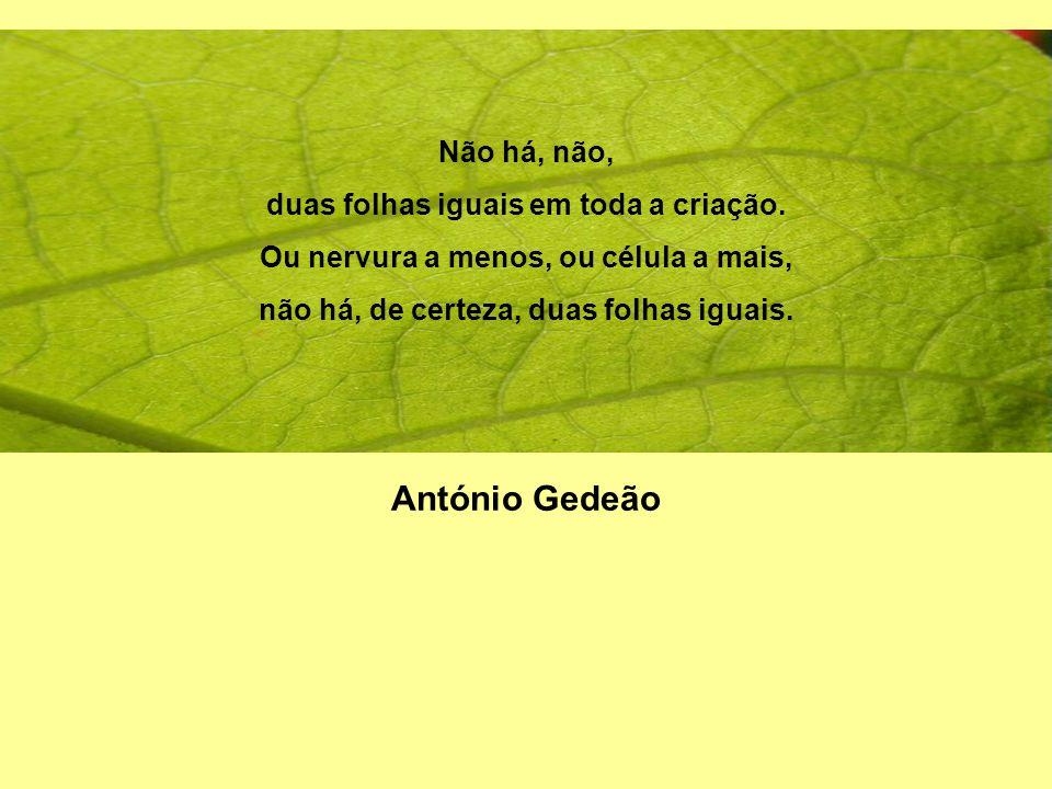Não há, não, duas folhas iguais em toda a criação. Ou nervura a menos, ou célula a mais, não há, de certeza, duas folhas iguais. António Gedeão