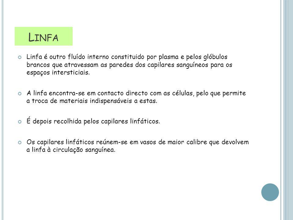 L INFA Linfa é outro fluído interno constituido por plasma e pelos glóbulos brancos que atravessam as paredes dos capilares sanguíneos para os espaços