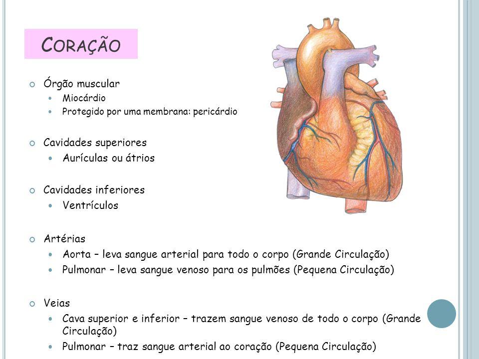 Órgão muscular Miocárdio Protegido por uma membrana: pericárdio Cavidades superiores Aurículas ou átrios Cavidades inferiores Ventrículos Artérias Aor