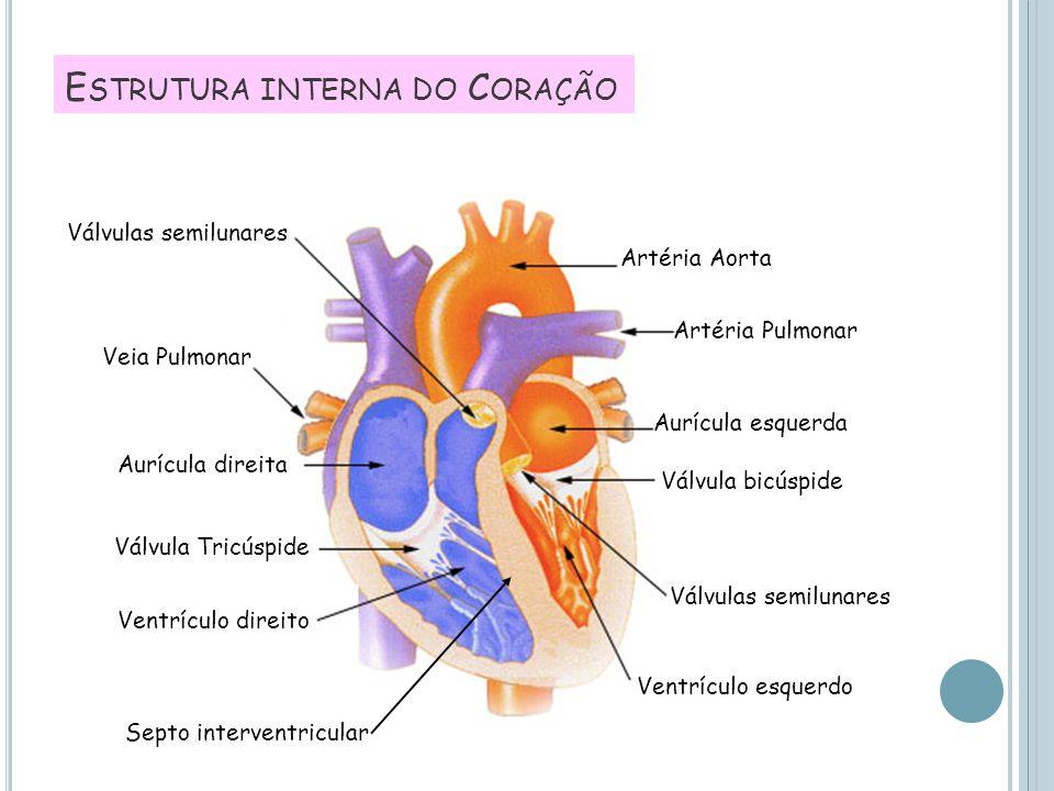 E STRUTURA INTERNA DO C ORAÇÃO Aurícula esquerda Artéria Pulmonar Artéria Aorta Válvula bicúspide Válvulas semilunares Ventrículo esquerdo Ventrículo