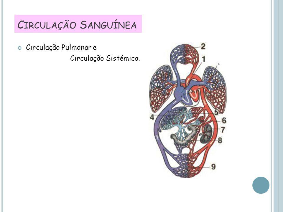 C IRCULAÇÃO S ANGUÍNEA Circulação Pulmonar e Circulação Sistémica.