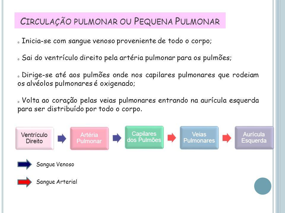 C IRCULAÇÃO PULMONAR OU P EQUENA P ULMONAR Ventrículo Direito Artéria Pulmonar Capilares dos Pulmões Veias Pulmonares Aurícula Esquerda Sangue Venoso
