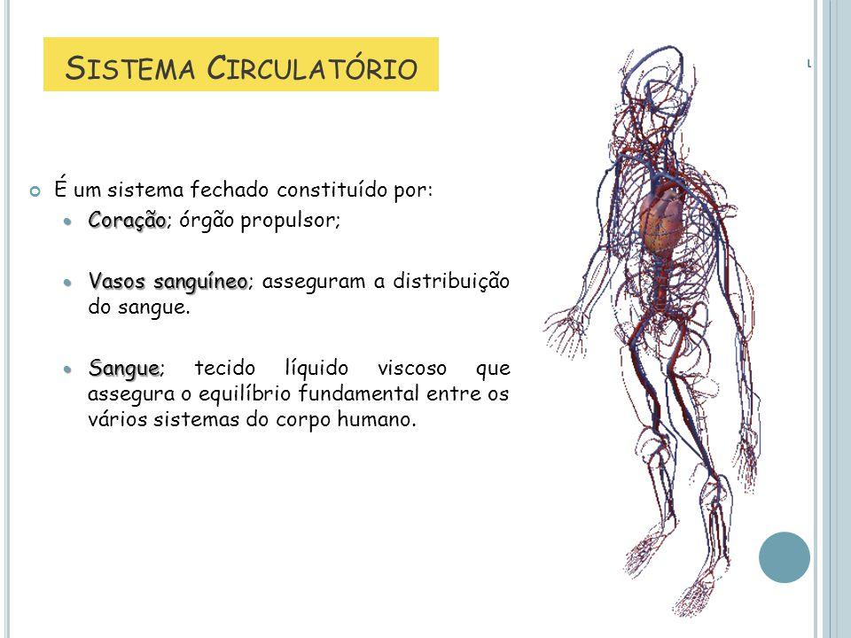 S ISTEMA C IRCULATÓRIO É um sistema fechado constituído por: Coração Coração; órgão propulsor; Vasos sanguíneo Vasos sanguíneo; asseguram a distribuiç