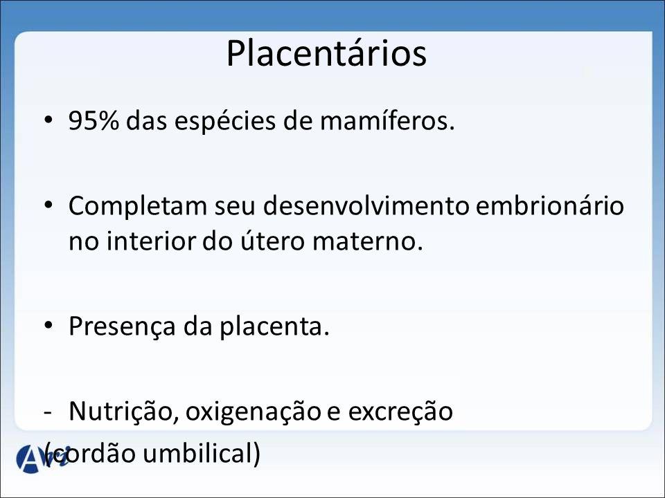Placentários 95% das espécies de mamíferos. Completam seu desenvolvimento embrionário no interior do útero materno. Presença da placenta. -Nutrição, o