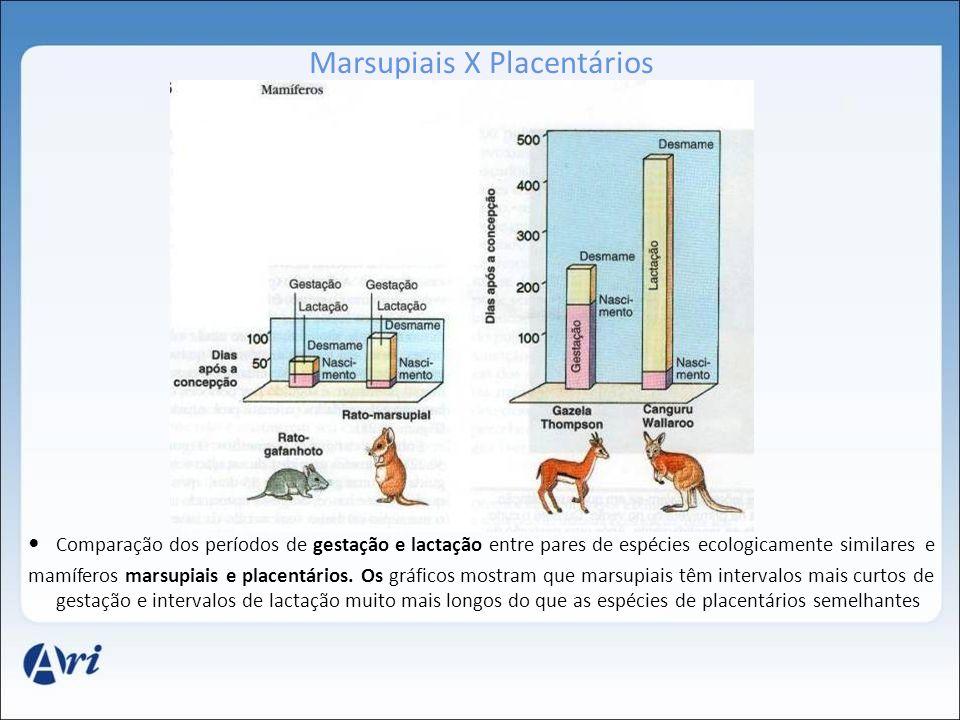 Marsupiais X Placentários Comparação dos períodos de gestação e lactação entre pares de espécies ecologicamente similares e mamíferos marsupiais e pla